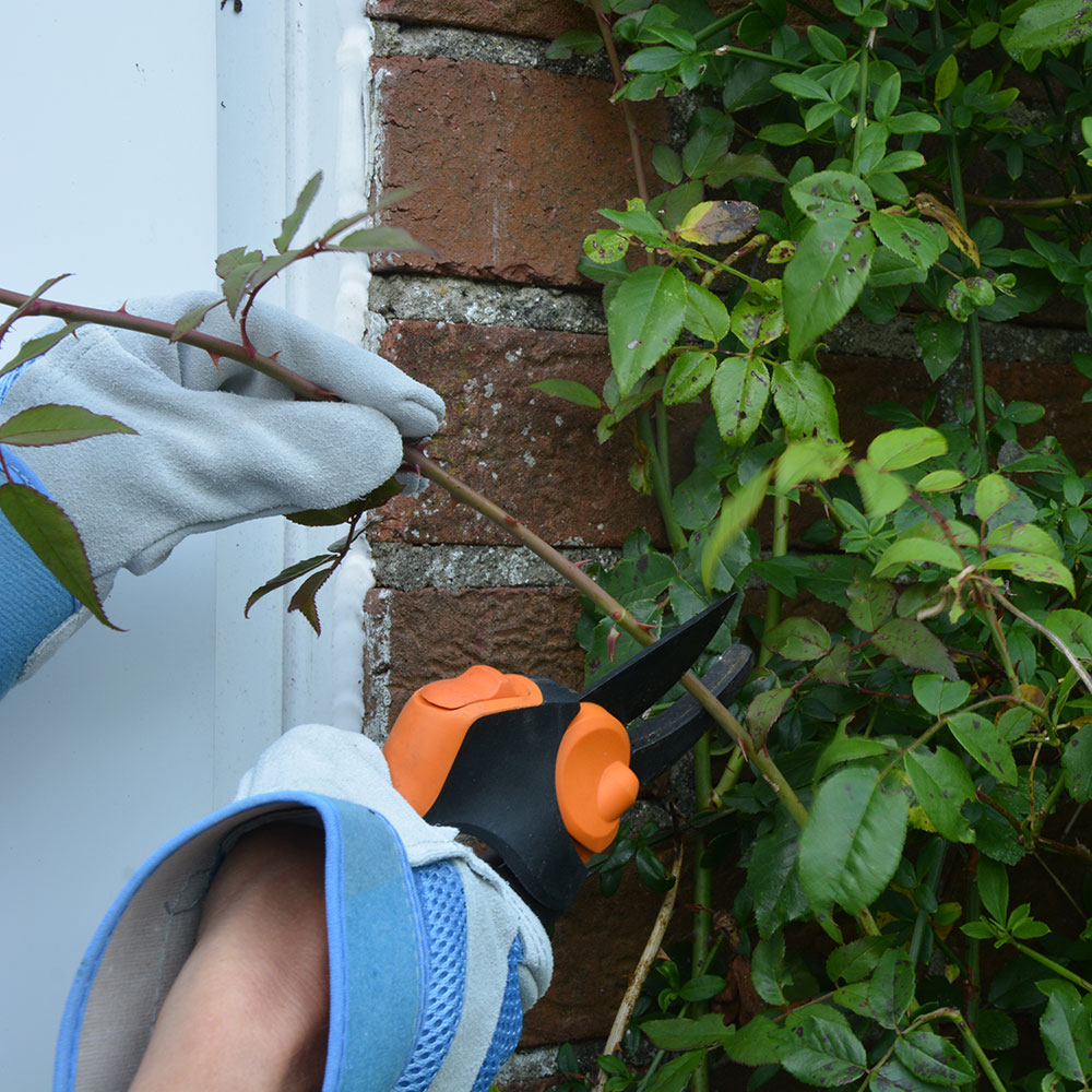 How-to-impianto-climbing-roses-2